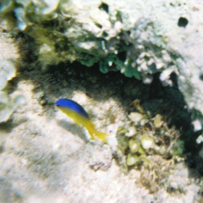 Neat fishy 2