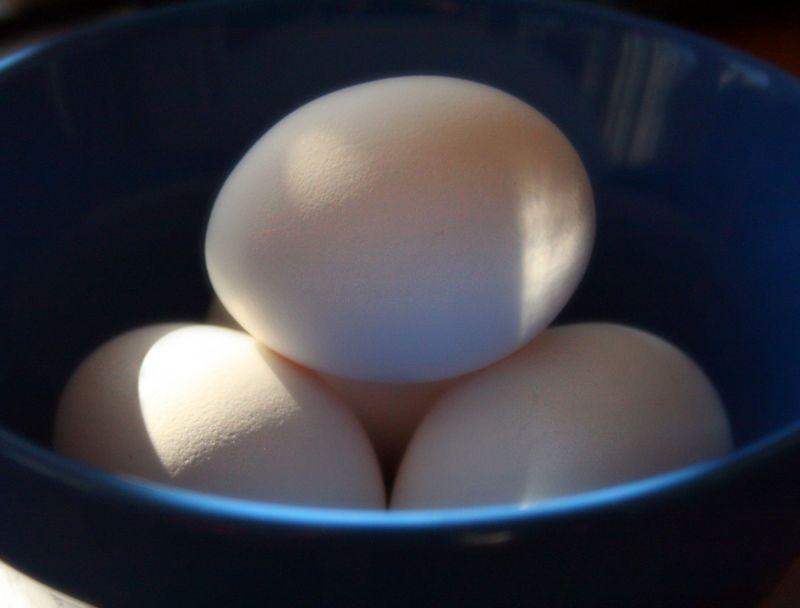 Farm fresh eggs!