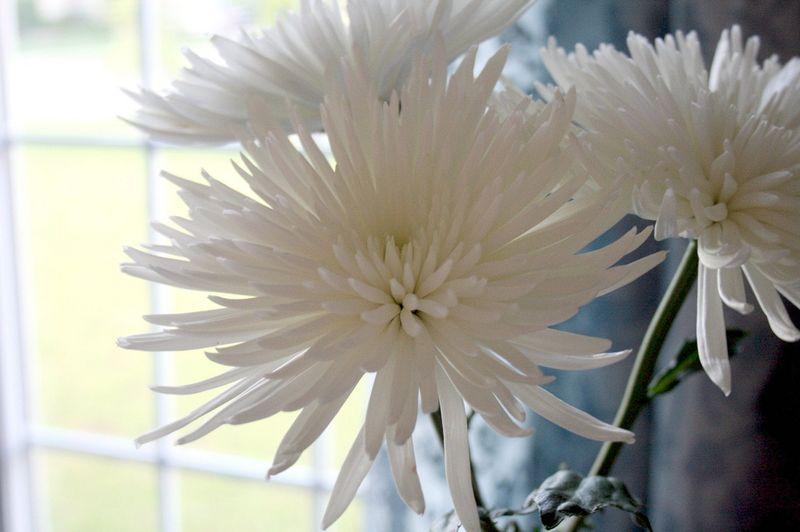 Tuesday fleurs pour mes amies
