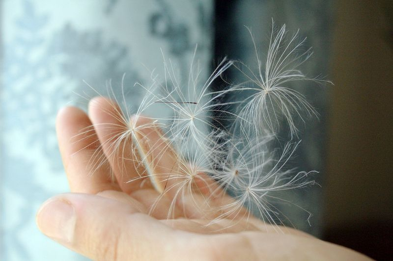A pocketful of wishing~